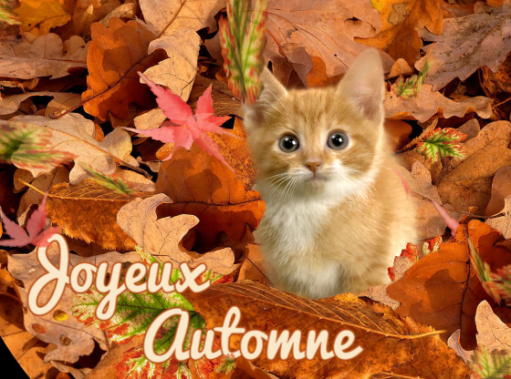 Cartes joyeux automne