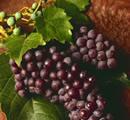 Eat fruit for Tu Bishvat
