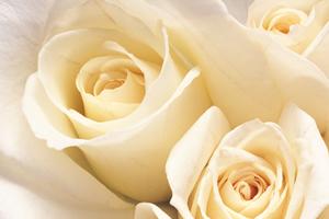 fête des roses