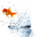 Poisson d'avril - La journée du rire dans TRADITION poisson