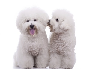 Une jolie carte avec un petit chien