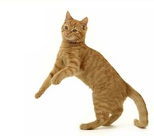 Découvrez les cartes mettant en scène d'adorables chats et chiens