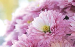 Conseils et textes de condoléances