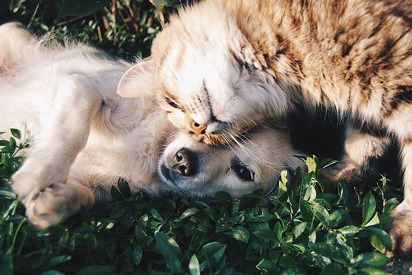 chat et chien au jardin