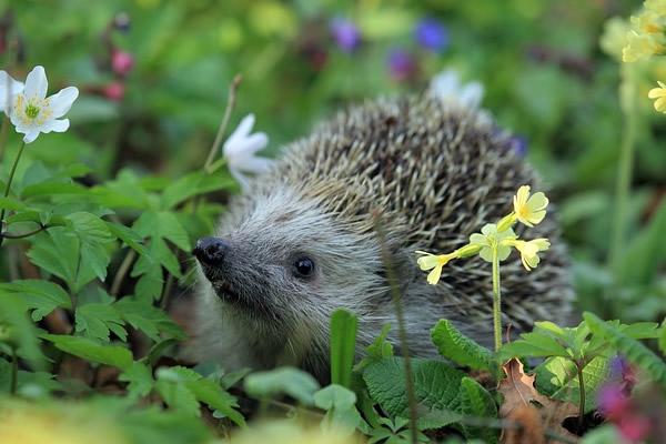 Les animaux et insectes utiles au jardin