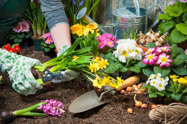 Que faire au jardin en avril