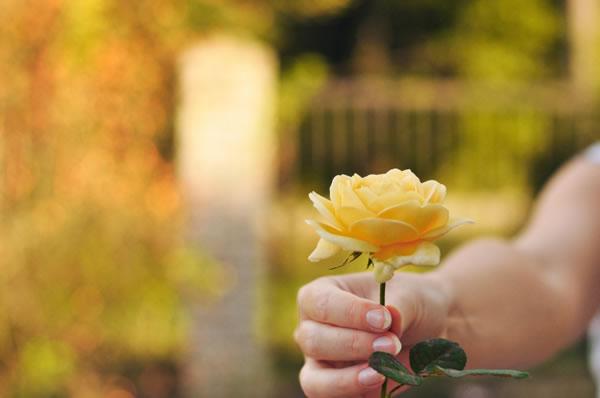 L'art de demander pardon