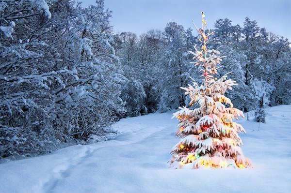 Wünschen Sie frohe Weihnachten mit einer schönen Karte