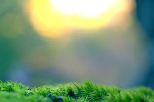 Journ�e mondiale de la Terre, 22 avril